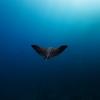 Diving Costa Rica – Playa del coco and Bat Island